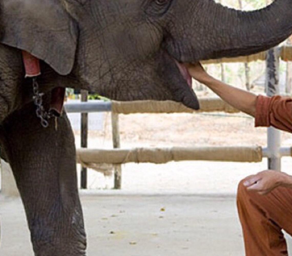 Em Brasília. Esculturas do tamanho de elefantes bebês chamam atenção para preservação do animal