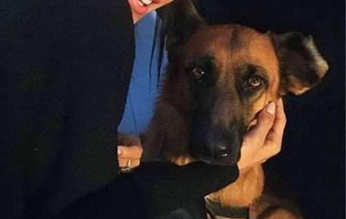 Maya, uma cadela de serviço que viaja pelo mundo