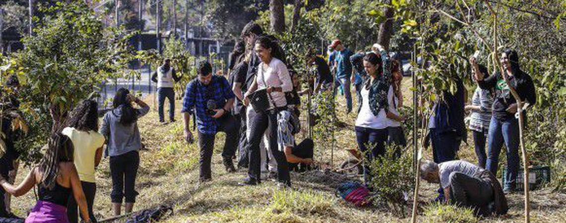 Economia verde pode gerar milhões de empregos na América Latina segundo relatório da OIT