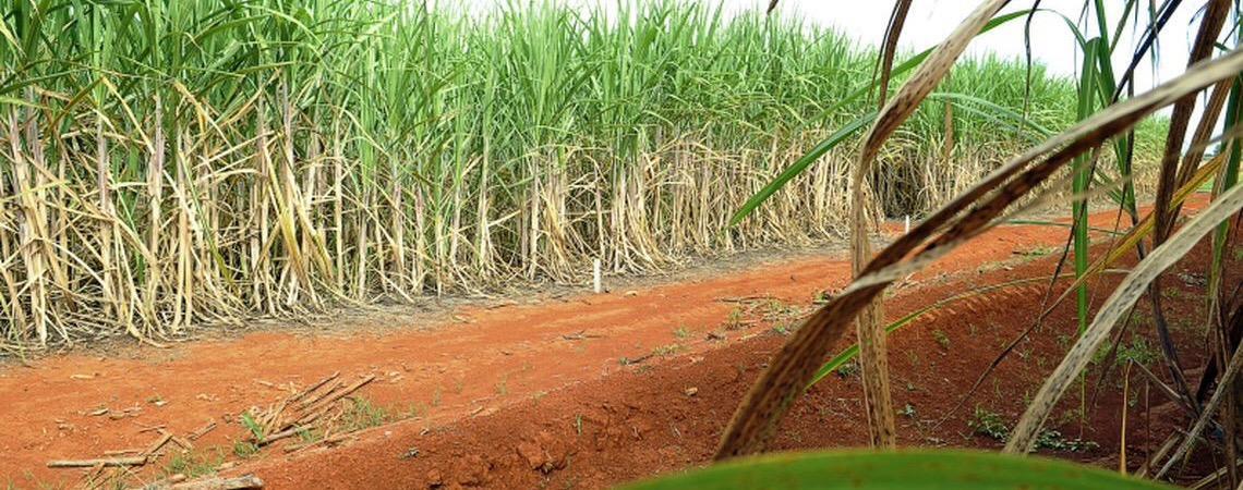 Governo do Brasil e China chegam a acordo sobre contencioso do açúcar