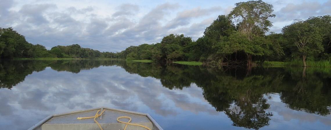 Desmatamento avança na Amazônia, que perde 19 hectares de florestas por hora
