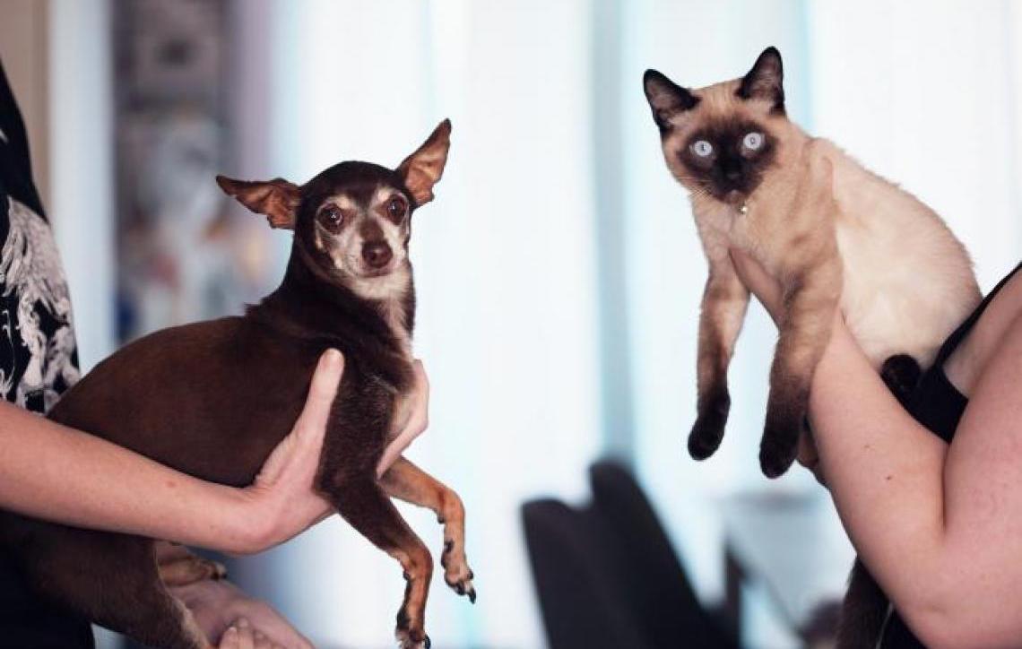 Cão e gato: é possível adaptar os dois na mesma casa