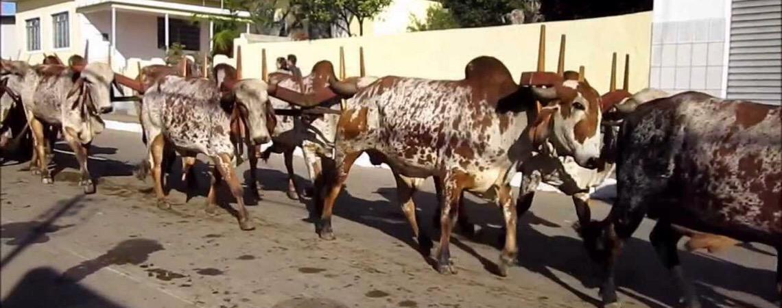 Carne bovina contribui para doenças e mudança climática, diz estudo