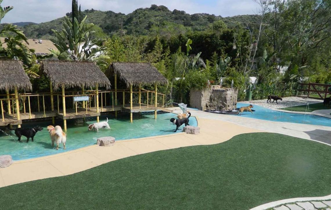 Resorts que aceitam Pets como hóspedes
