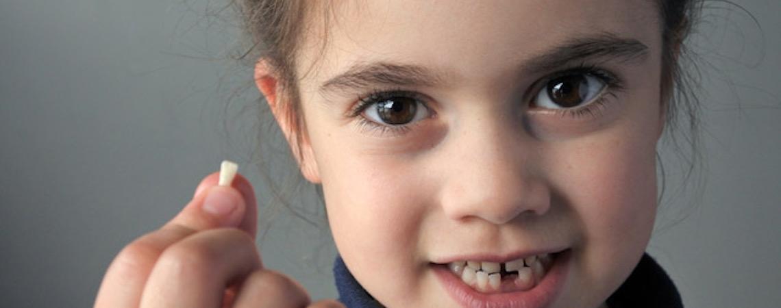 Dentes de leite são doados para pesquisa sobre células-tronco feitas na USP