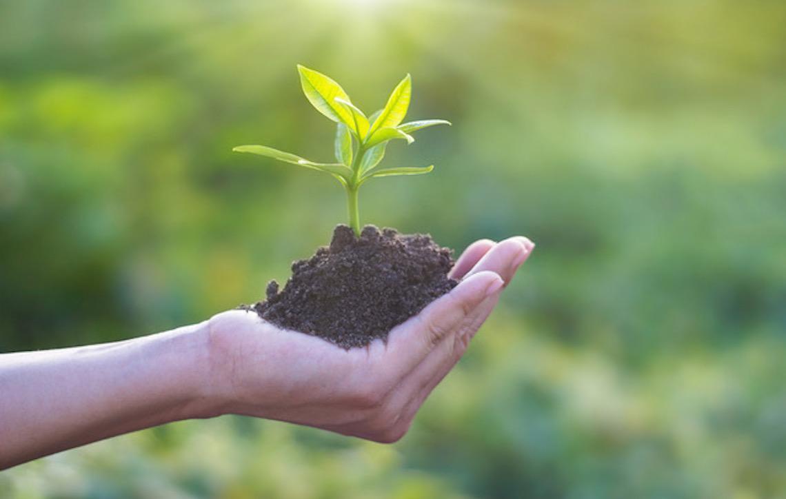 Saiba quais são as profissões relacionadas ao meio ambiente que ajudam a melhorar o mundo