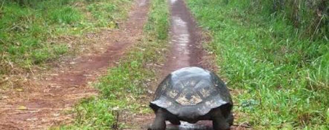Previsto pela Lei Nº 13.005. Plano Nacional de Educação aplicado a passos de tartaruga