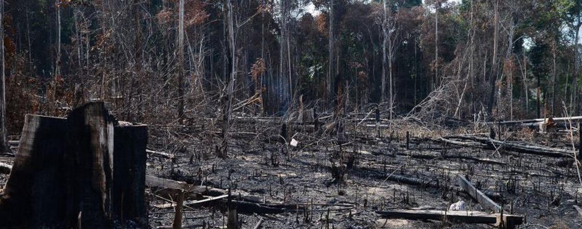 Desmatamento é principal preocupação do brasileiro, revela a pesquisa global Earth Day