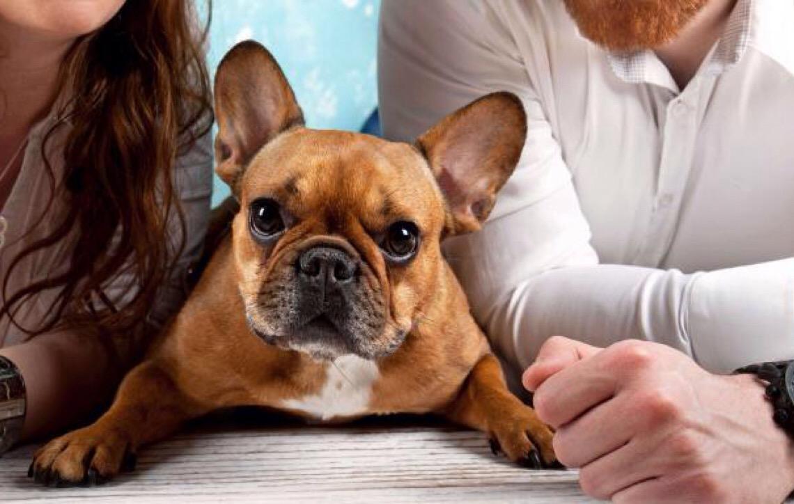 Pensão alimentícia. Um direito do seu pet, advogada explica