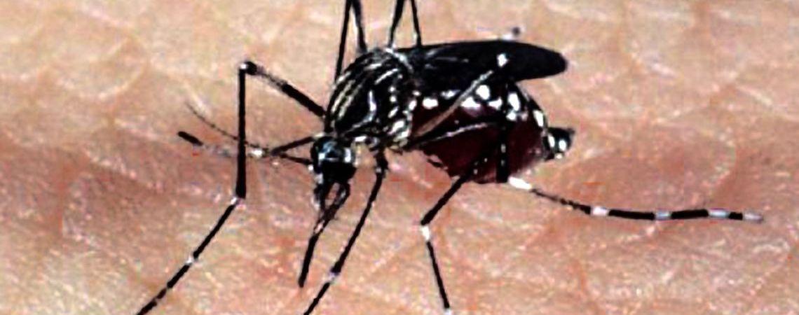 São Paulo tem 267,6 mil casos de dengue este ano