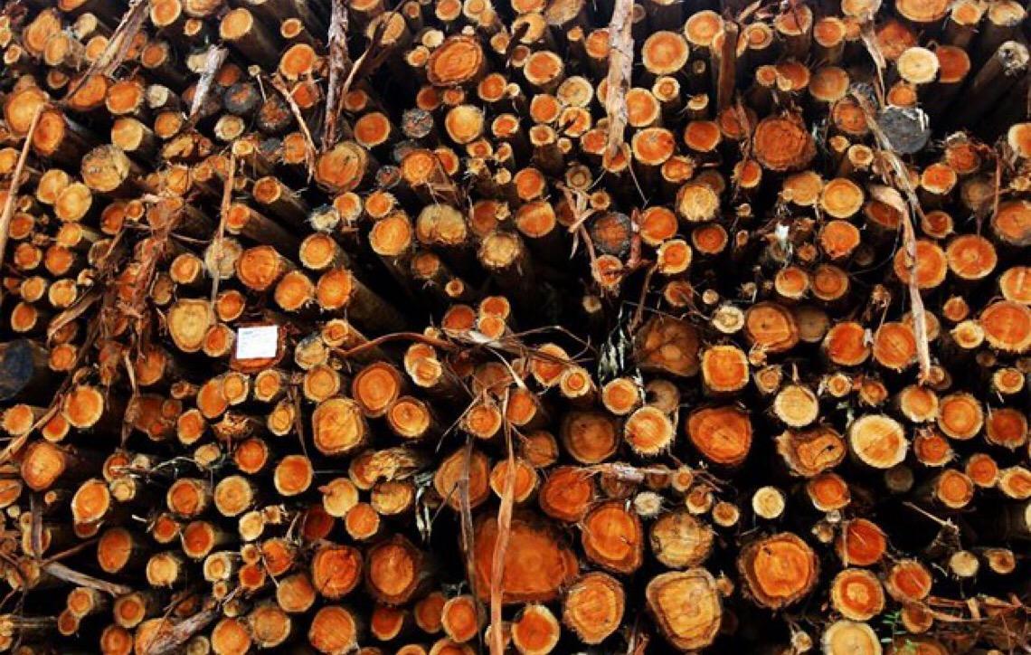 Após 20 anos. Porto de Ilhéus voltará a vender eucalipto in natura para Portugal