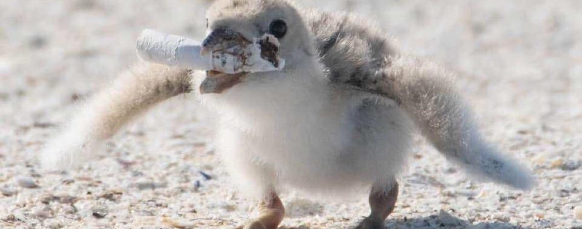 Natureza em perigo. Foto que mostra pássaro dando guimba de cigarro para filhote comer choca o mundo
