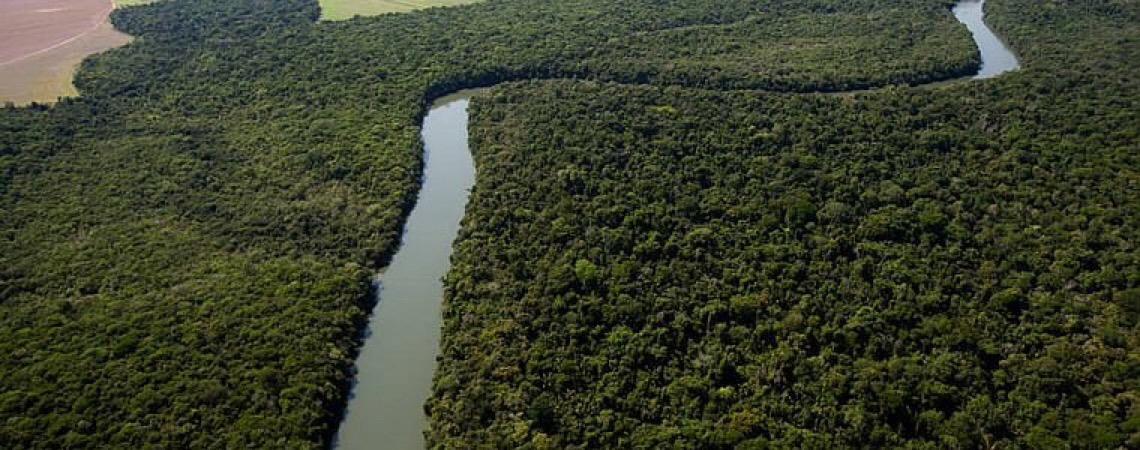 Governo da Alemanha retém doação de R$ 151 milhões para Fundo Amazônia