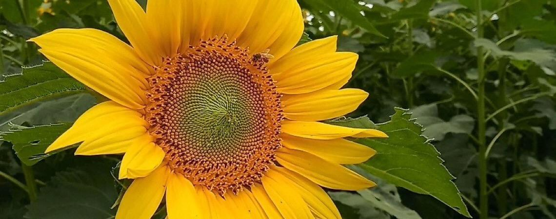 Colmeia Viva. Criadores de abelhas e produtores de agrotóxicos buscam consenso