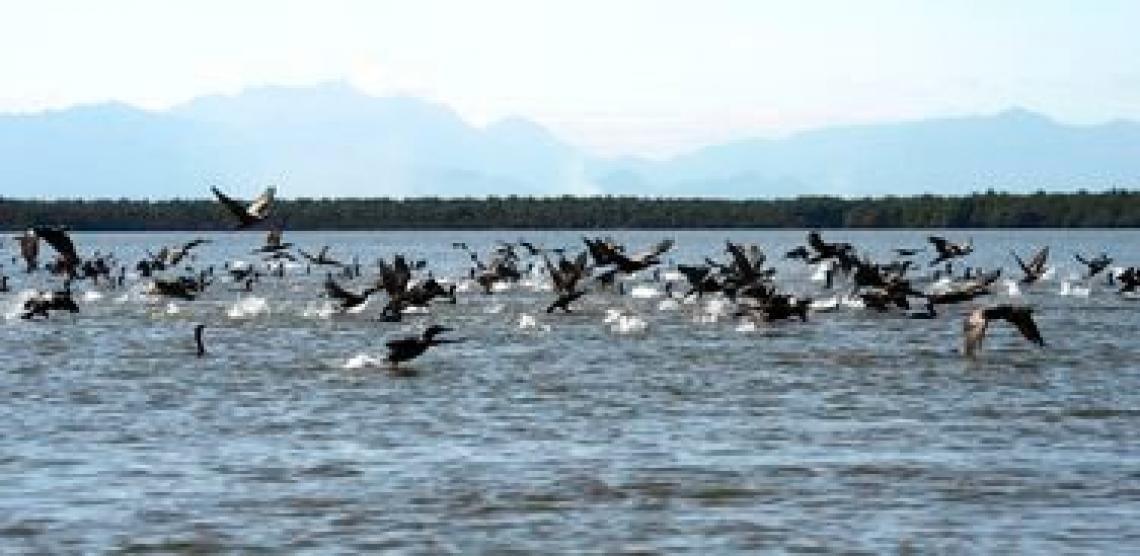 Área preservada na Baía de Guanabara é chamada de Pantanal Fluminense