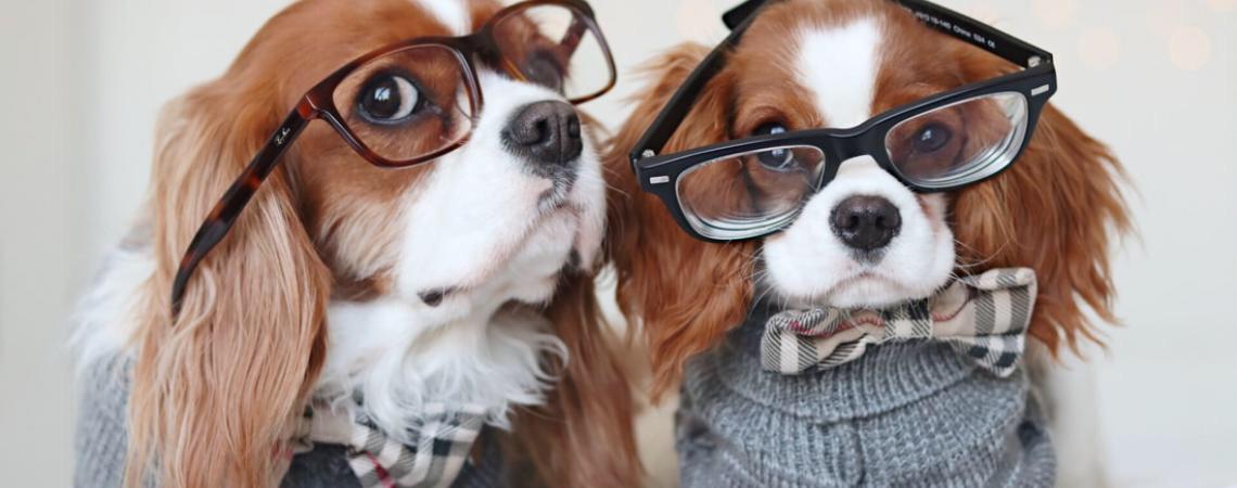 Pet influencer. Quais são os animais mais conhecidos na web