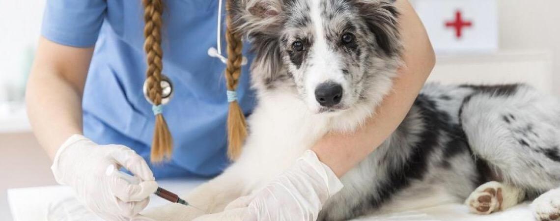 Vacinação animal é sinônimo de cuidado com seu pet