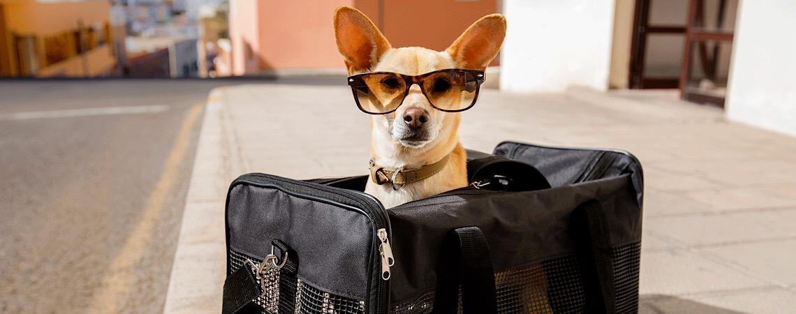 Como embarcar com animais de estimação nas empresas de aviação
