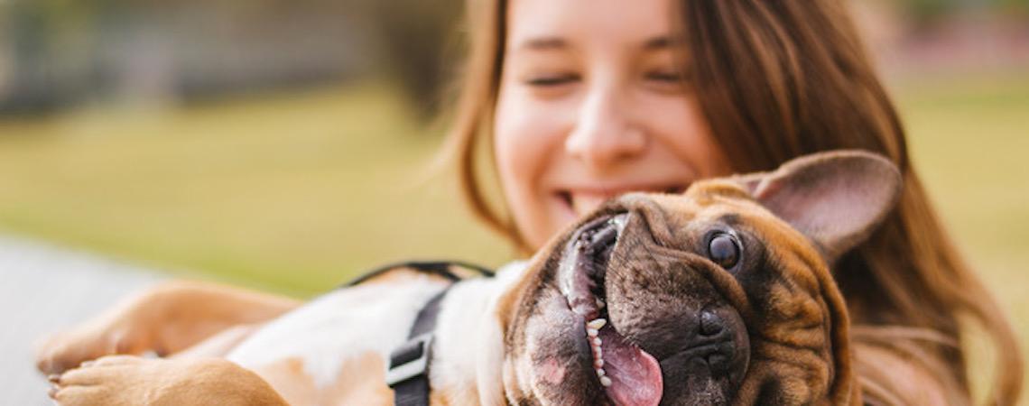Bem-estar animal: cães de estimação absorvem estresse dos donos
