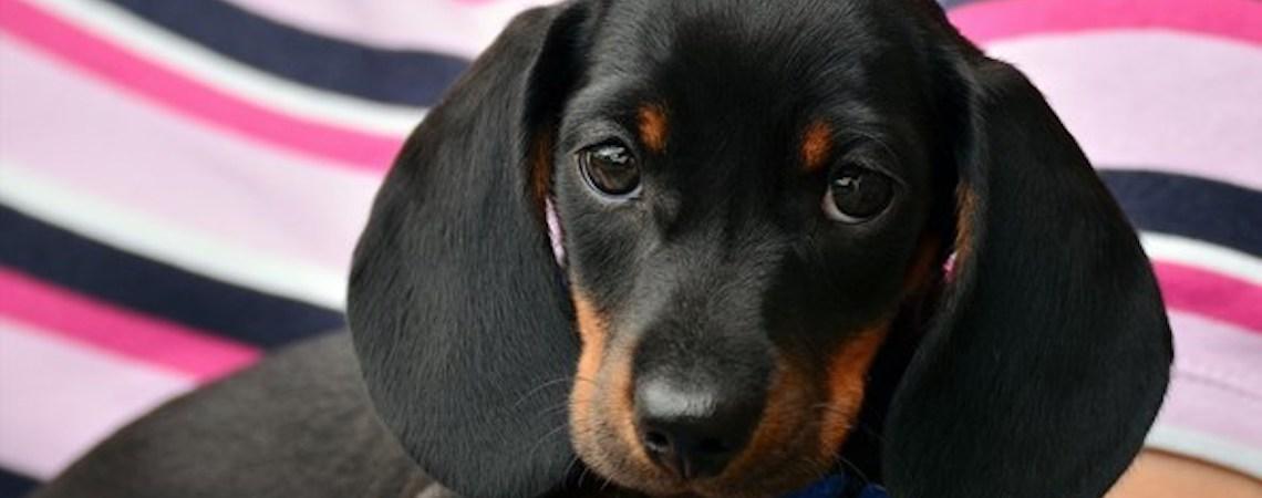 Vai viajar e não tem onde deixar o cachorro?