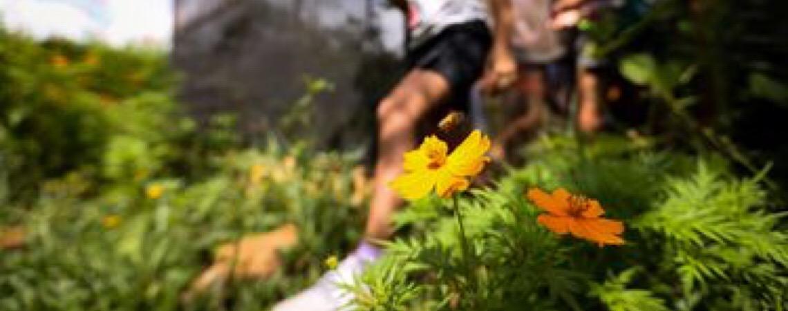 Geração atual tem pouco contato com a natureza, alertam especialistas