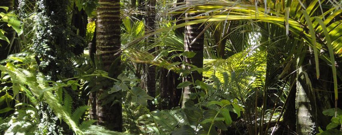 Professor de Harvard avalia risco de invasão do Brasil para salvar Amazônia