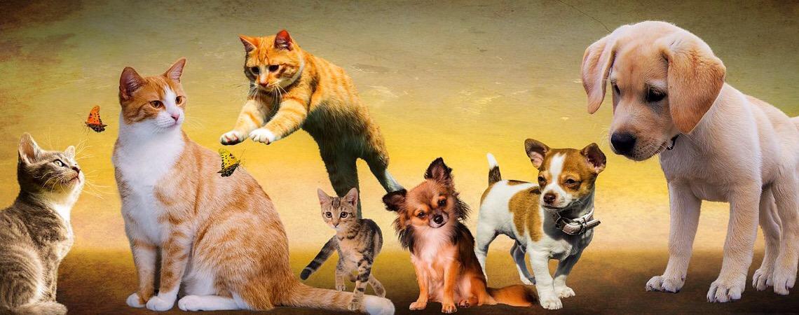 Lei em Brasília autoriza entrada de animais de estimação em ônibus e metrô