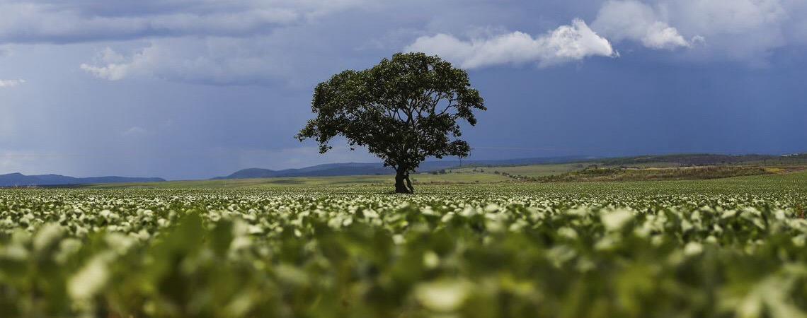 Cereais, leguminosas e oleaginosas podem ter safra recorde  no Brasil