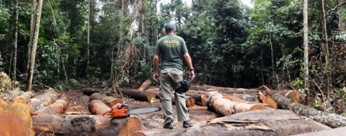 Senador denuncia invasão em terras indígenas em Rondônia