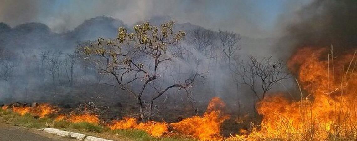 Aumento do número de queimadas na Amazônia pode impactar a conta de energia elétrica