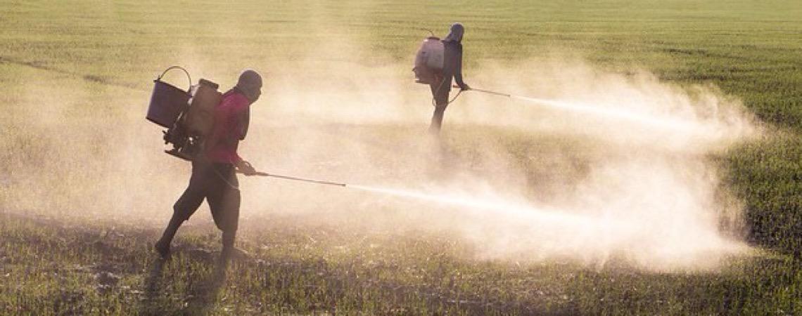 Mais de 70% das mortes por agrotóxicos ocorrem nas regiões Sudeste e Nordeste do Brasil