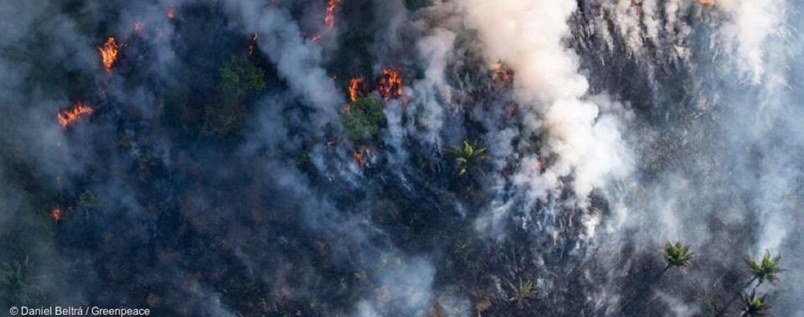 Grupo de luxo da Louis Vuitton doa 10 milhões de euros para a Amazônia