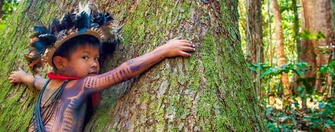 Na contramão do agronegócio, terras indígenas lideram preservação e reflorestamentos