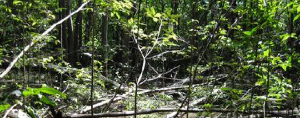Itamaraty diz que países ricos descumprem acordos para proteção ambiental