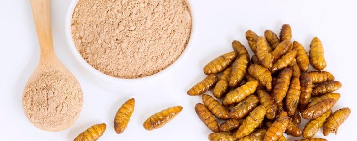 Veterinários ingleses estão indicando ração à base de insetos para pets