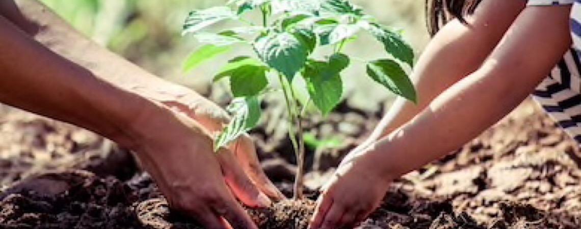 Uruguai planta árvores nativas para restaurar florestas