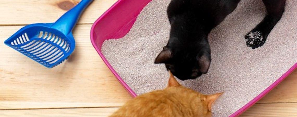 Areia de gato biodegradável pode ser jogada em vaso sanitário