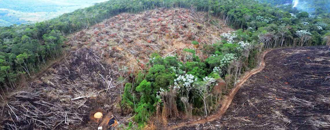 Caem gastos com ações de gestão ambiental