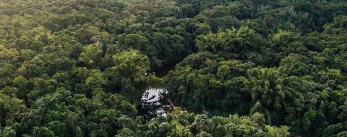 Desmatamento da Mata Atlântica no último ano foi o menor desde 1985