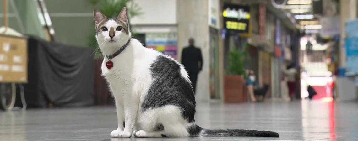 Gato 'ganha na Justiça' o direito de circular por galeria de Copacabana, Zona Sul do Rio