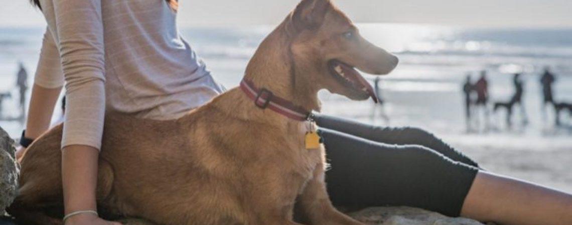 Cães são liberados para passear nas areais das praias do Rio