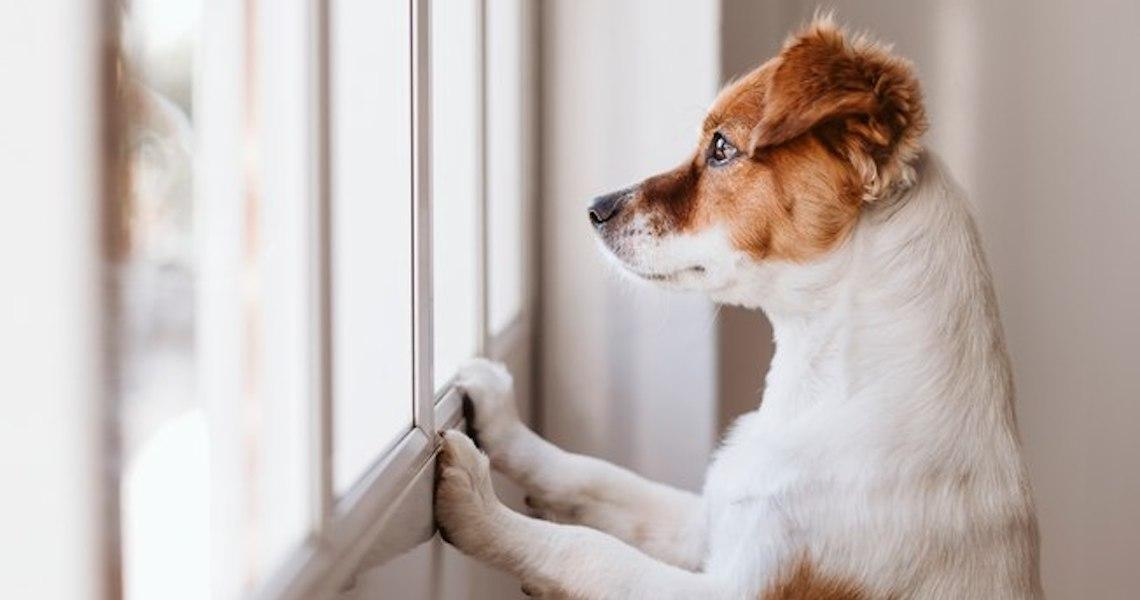 4 sinais de que estou sendo negligente com meu animal de estimação