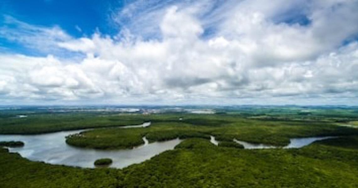 O que está acontecendo na Amazônia?