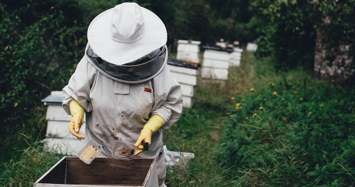 A vida humana e as abelhas