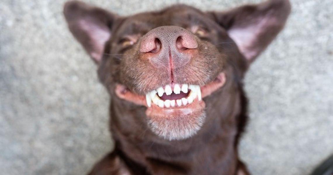 Cinco curiosidades sobre cachorros que você não conhecia