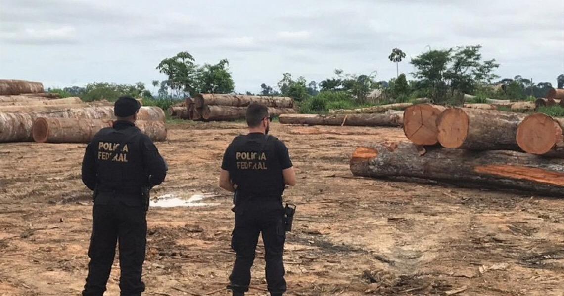 Polícia Federal desativa quatro madeireiras ilegais na região de São Félix do Xingu