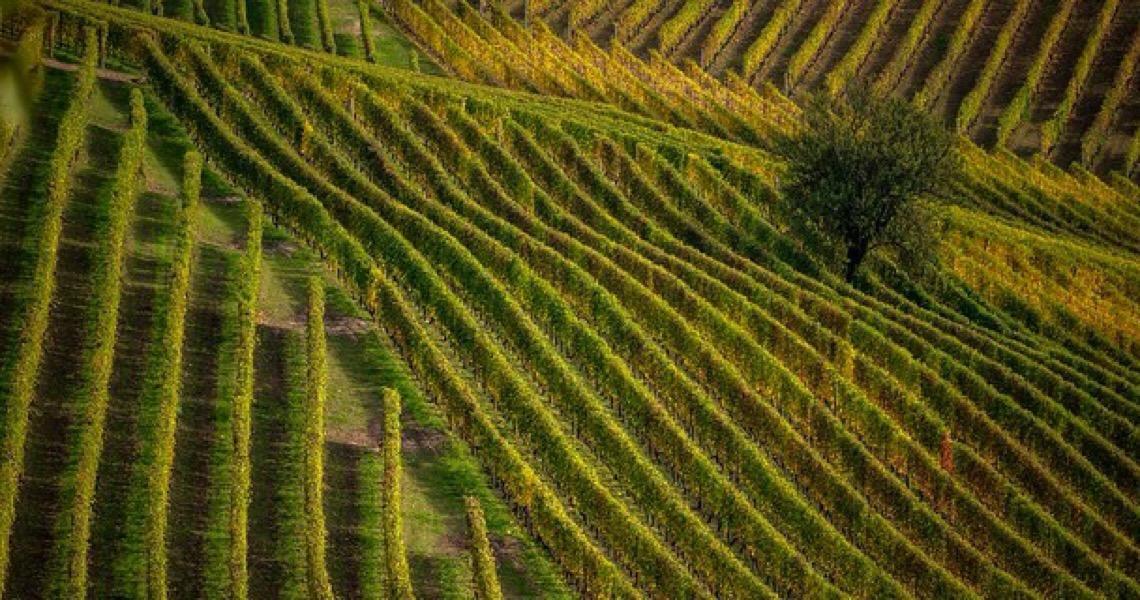 Pequenas propriedades no Brasil ocupam só 2,3% das terras usadas para produção agropecuária