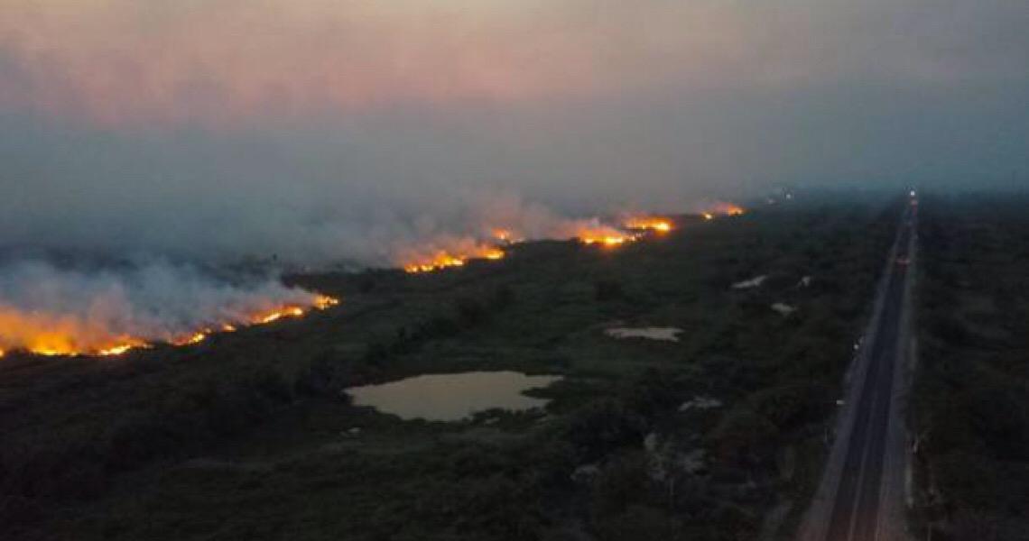 Em 4 dias, incêndios devastam 50 mil hectares do Pantanal em MS