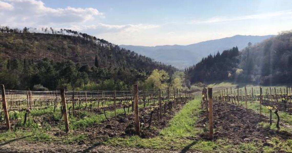 Um roteiro em meio ao sol e aos vinhedos da Toscana, na Itália
