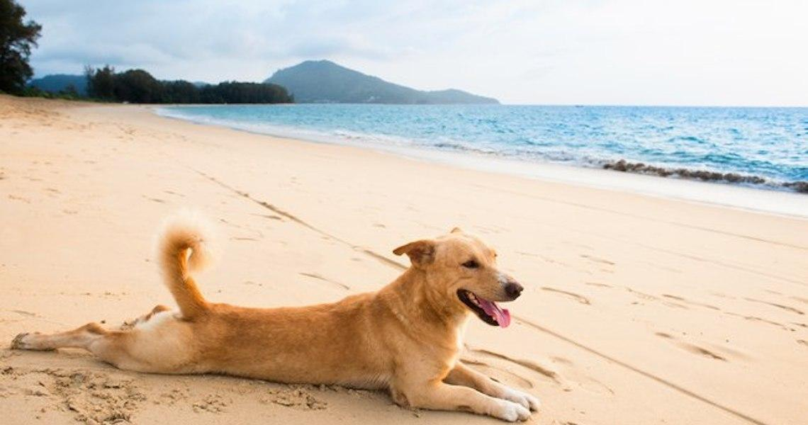 Protetor solar para cães, o item indispensável para o verão